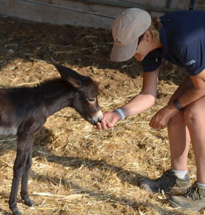 Reaching more donkeys in Cyprus