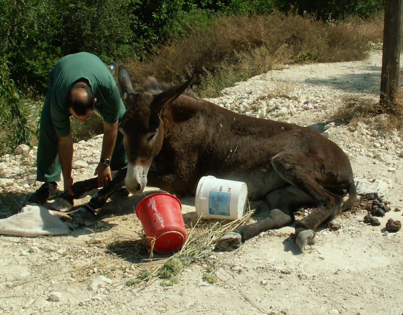 Help us make donkey lives better