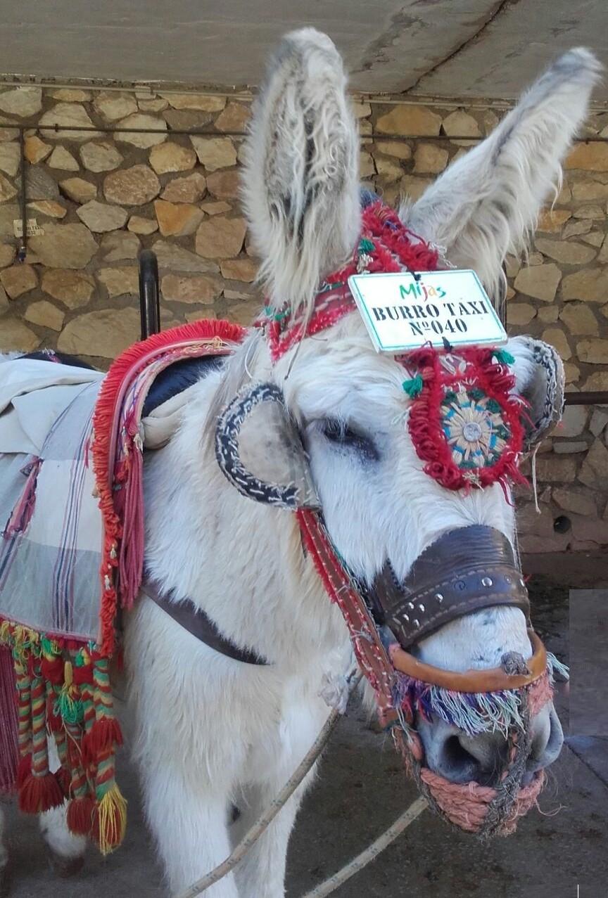 Mijas donkey