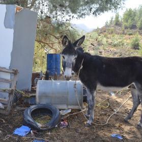 Reaching more donkeys in Cyprus 2