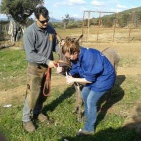 Helping donkeys and mules in Greece