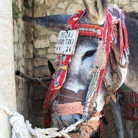 Mijas taxi donkey