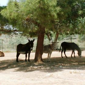 Donkeys standing in the shade