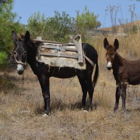 Helping donkeys with our outreach work