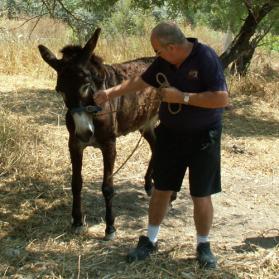 Donkey in distress
