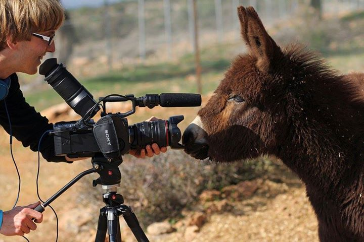 Filming donkeys